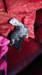 Pauline's new baby Grrey on couch