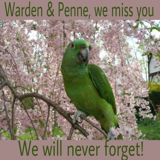 Remembering Penne
