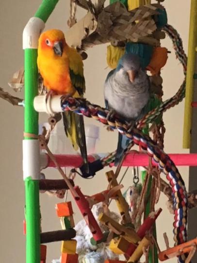 Zack & Bubbs 4-2018