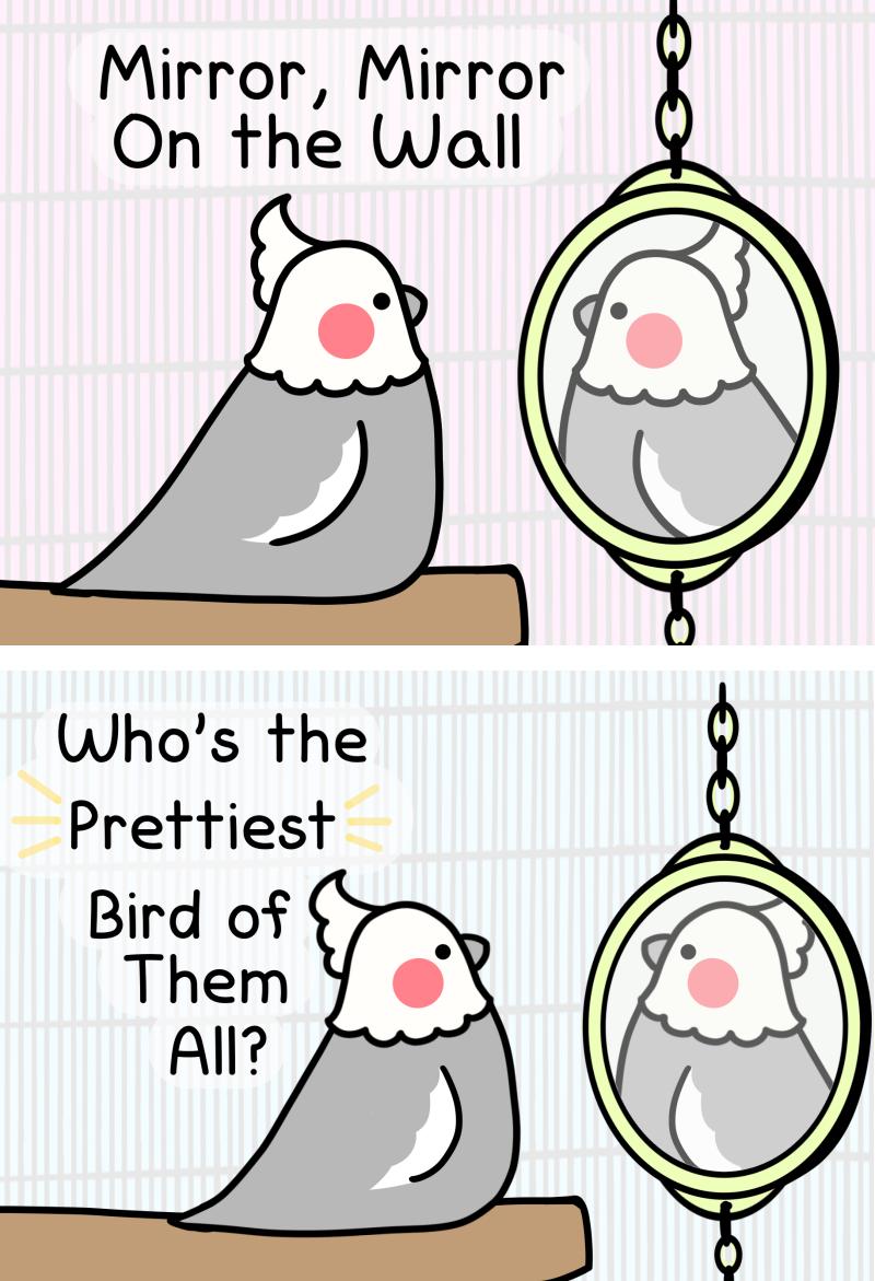 mirror mirror twt 1